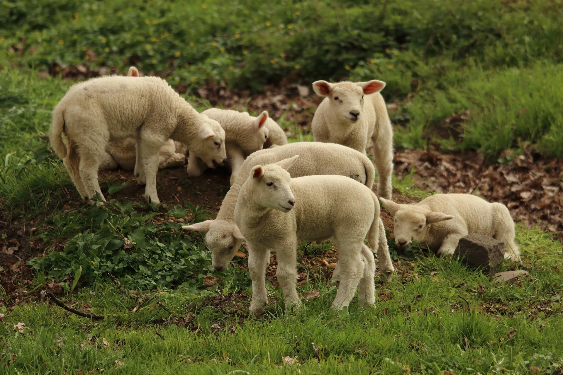 Comment être un carnivore le plus écolo possible