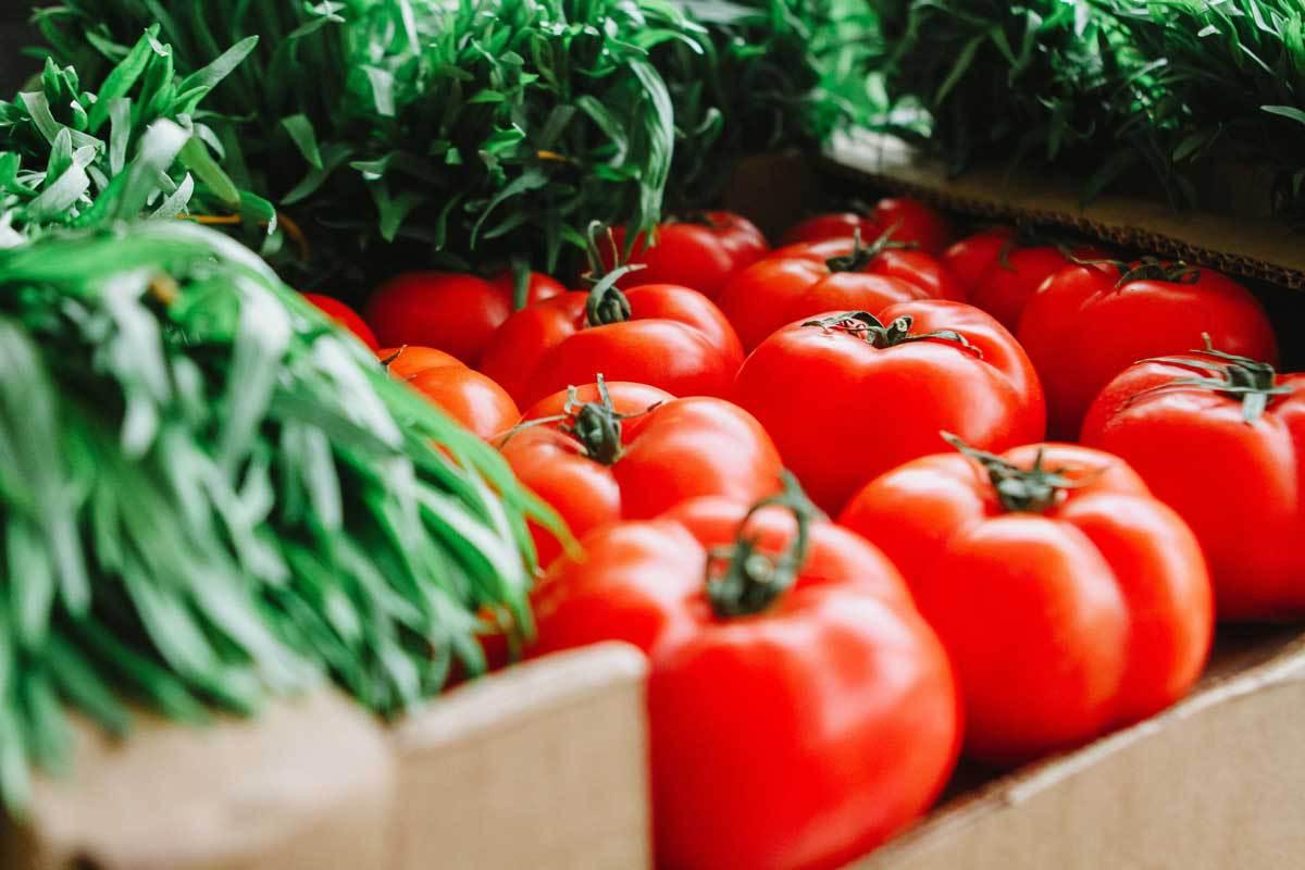 Le concentré de tomates, de l'or en conserves