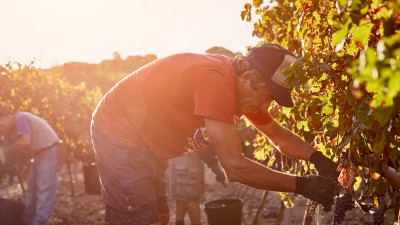 Comment le changement climatique bouscule l'industrie du vin