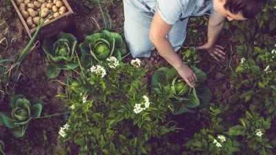 Les métiers verdissants, un pari sûr