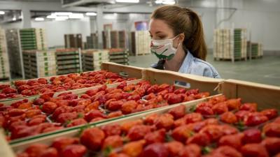 Fraises et asperges françaises : le coup de pouce intéressé de la grande distribution