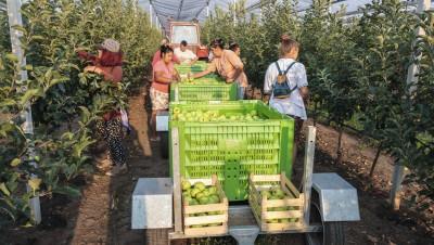 Alimentation: l'agriculture biologique peut-elle nourrir la planète?