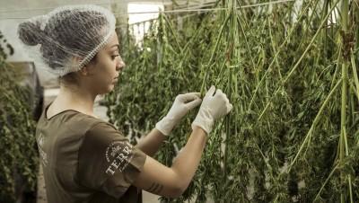 Travail au noir, cannabis, fonds occultes... Doit-on comptabiliser l'économie souterraine ?