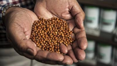 Biodiversité des graines: l'autre extinction de masse