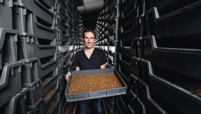 Éleveur d'insectes, un métier d'avenir