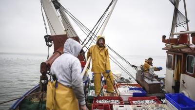 Brexit : ces poissons que les pêcheurs français ne peuvent (quasiment)plus pêcher