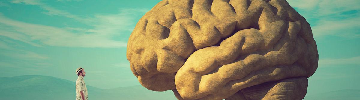 Le cerveau, levier de productivité pour l'entreprise du futur