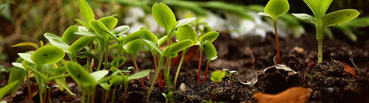 L'agroécologie, comment ça marche ?