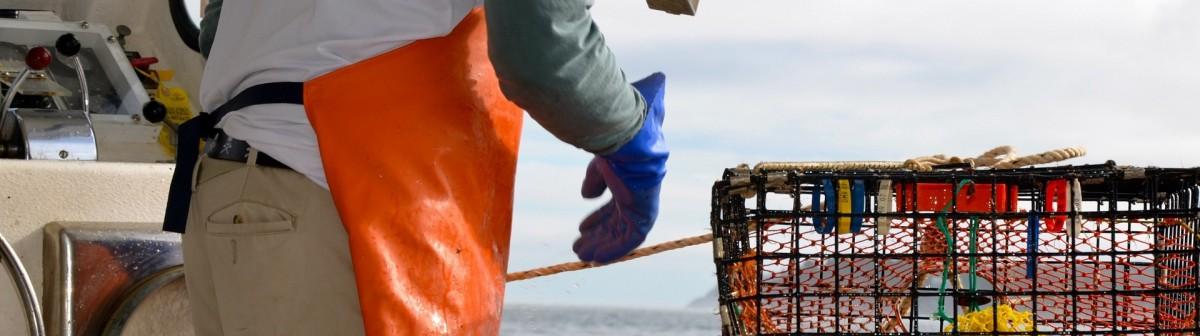 Protéger l'océan, une opportunité économique