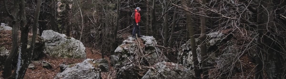 Jusqu'où privatiser les forêts françaises?