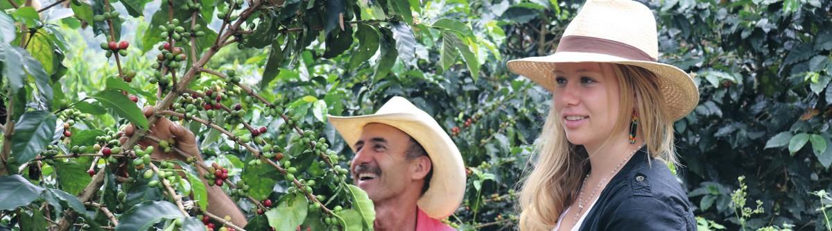 Le café menacé par le réchauffementclimatique: «Si la température augmente de plus de trois degrés, ce sera très grave.»