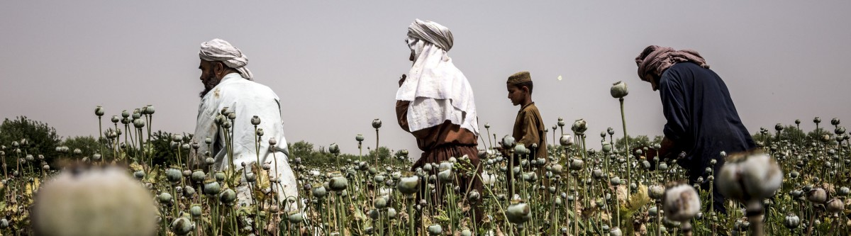 Afghanistan: pourquoi les talibans ne renonceront (sans doute) pas à l'opium